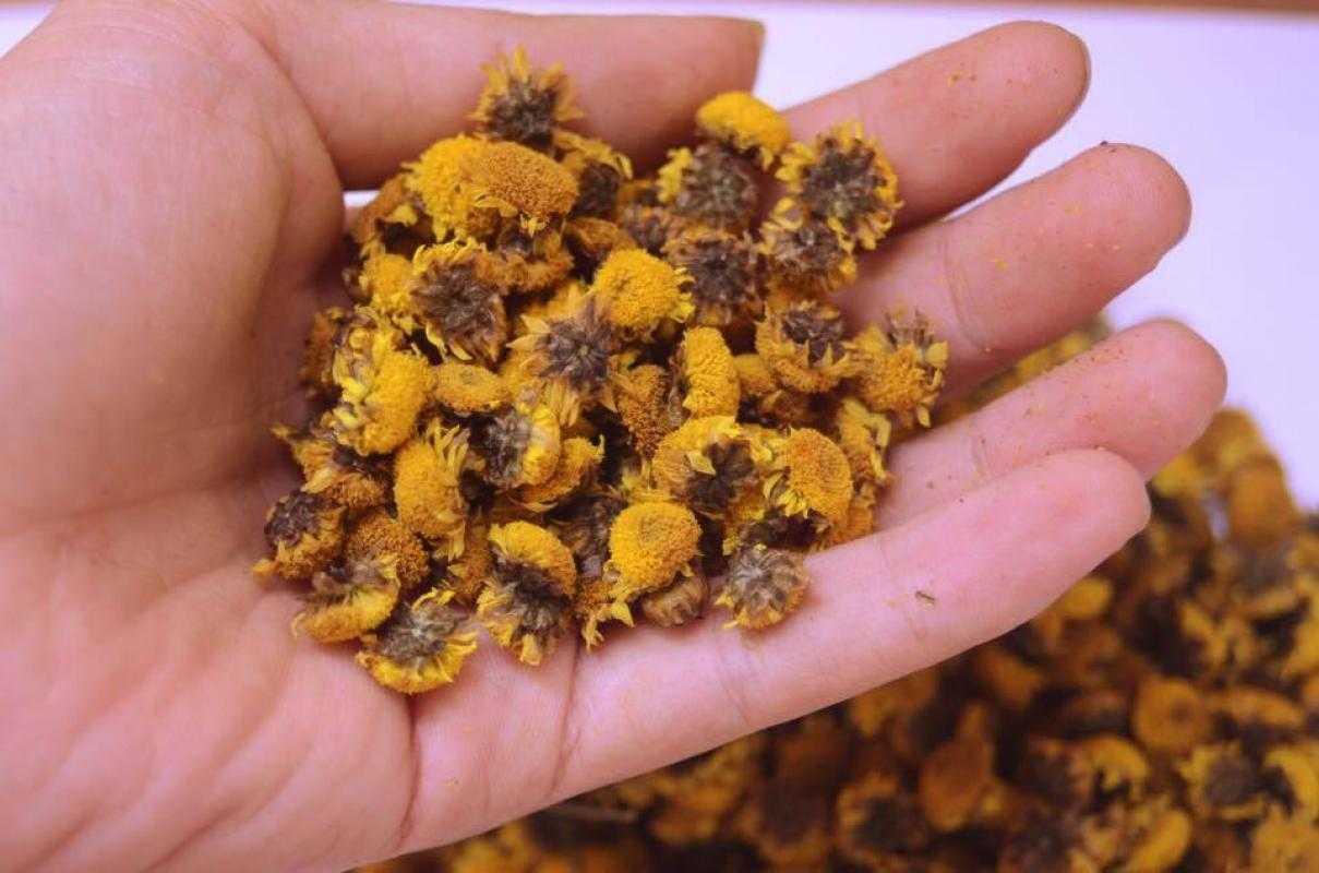 Bài thuốc trị mụn trứng cá bằng y học cổ truyền từ dã cúc hoa