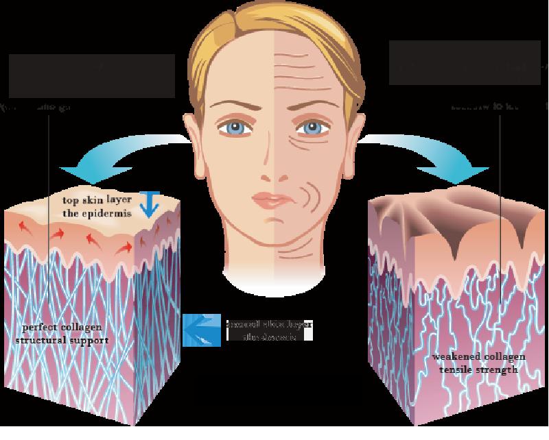 Kết quả hình ảnh cho collagen