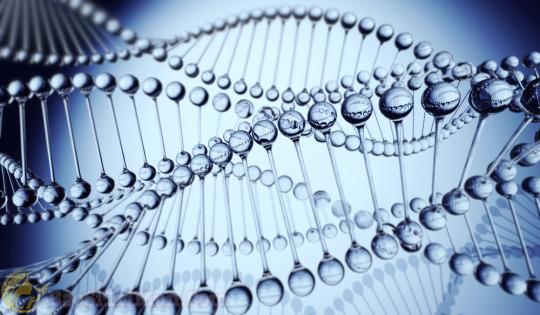 Mụn đầu trắng do yếu tố di truyền