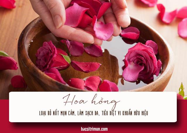 cách trị mụn cám cho nam bằng hoa hồng