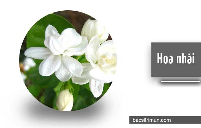 cách trị mụn nhọt bằng hoa nhài