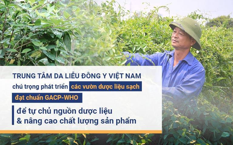 Trung tâm Da liễu Đông y Việt Nam chú trọng phát triển các vườn dược liệu sạch để đảm bảo nguồn thảo dược